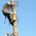 Baumpflege - Eignungsuntersuchung - Arbeitsmedizin in Detmold